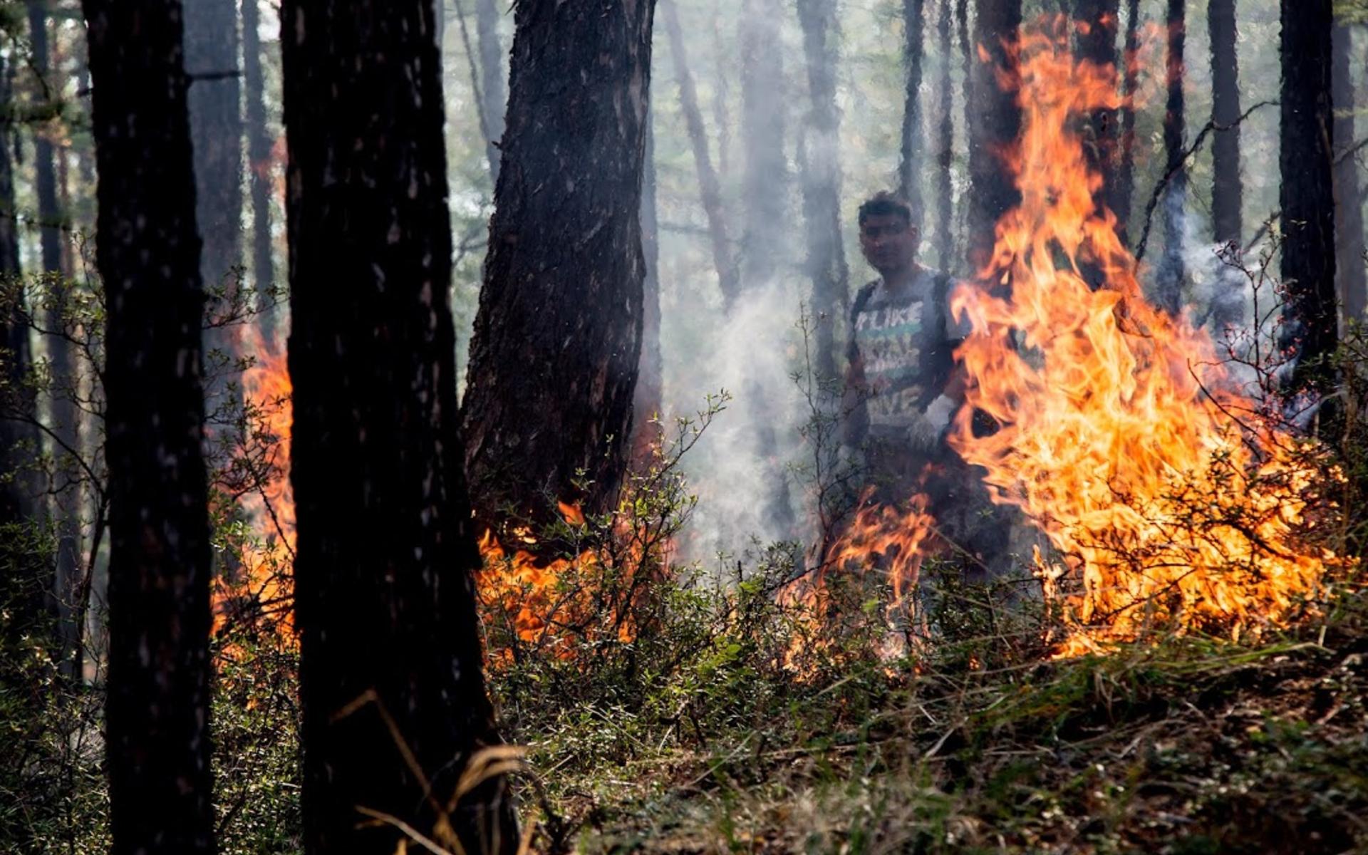 картинки лесов в огне букеты фрезий это