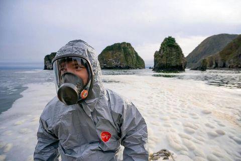 Официально: 95% обитателей дна Авачинской бухты на Камчатке мертвы